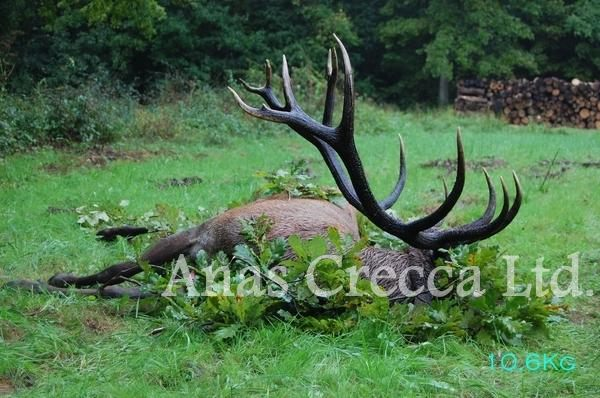 red_stag_hunting_in_hungary_11.jpg