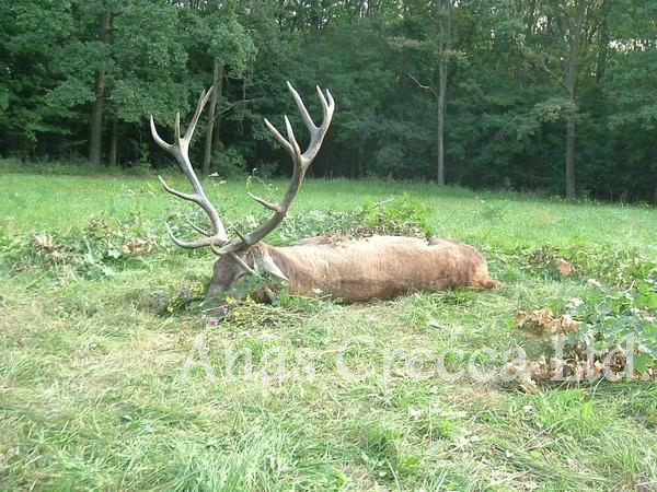red_stag_hunting_in_hungary_14.jpg